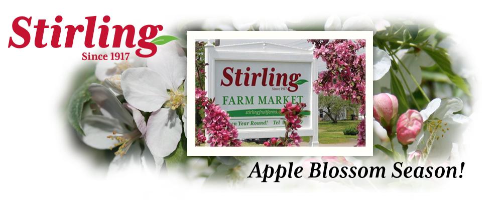 Apple Blossom Season